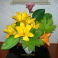 庭の花葉で 7月~百合
