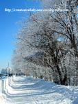 雪の華満開です