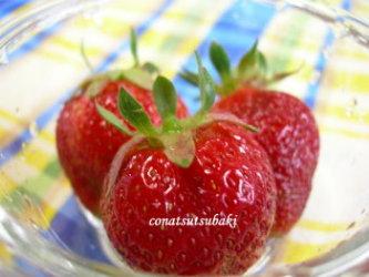苺 ~我が家の庭から~