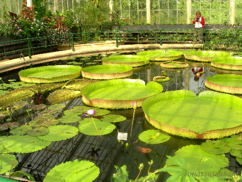 Waterlily_house